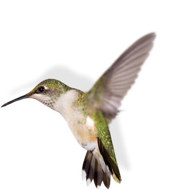 A hummingbird flapping its wings