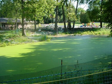 A pond with algae growing on the surface